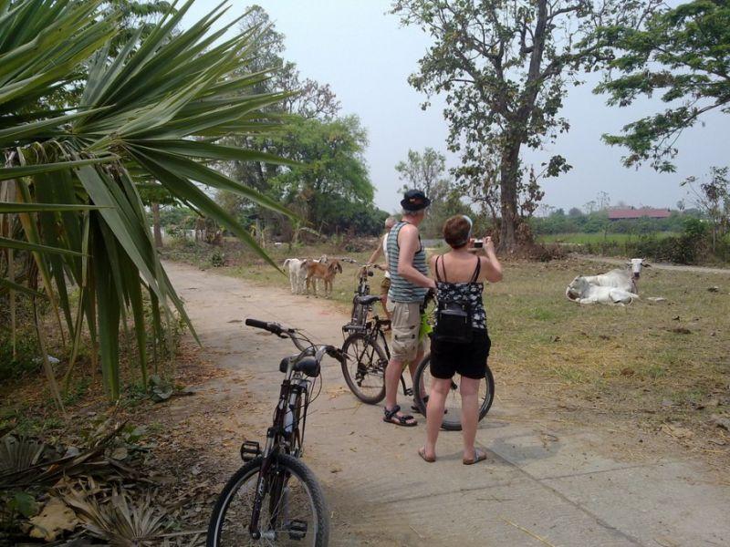 Chiang Mai Dagtour