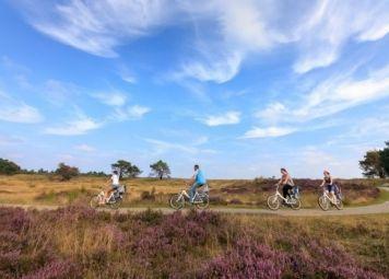 Veluwe E-bike Tour