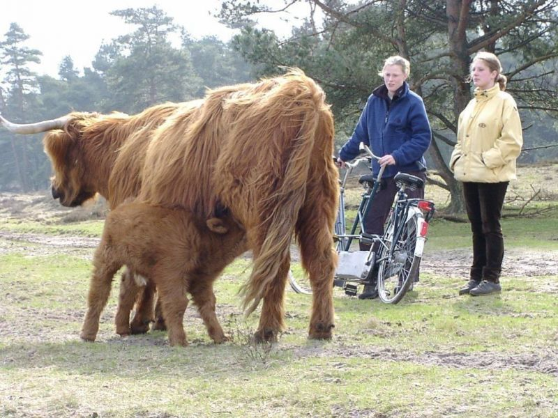 Veluwe E-Bike Tour