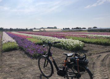 Bloemenstreek E-bike Dagtour